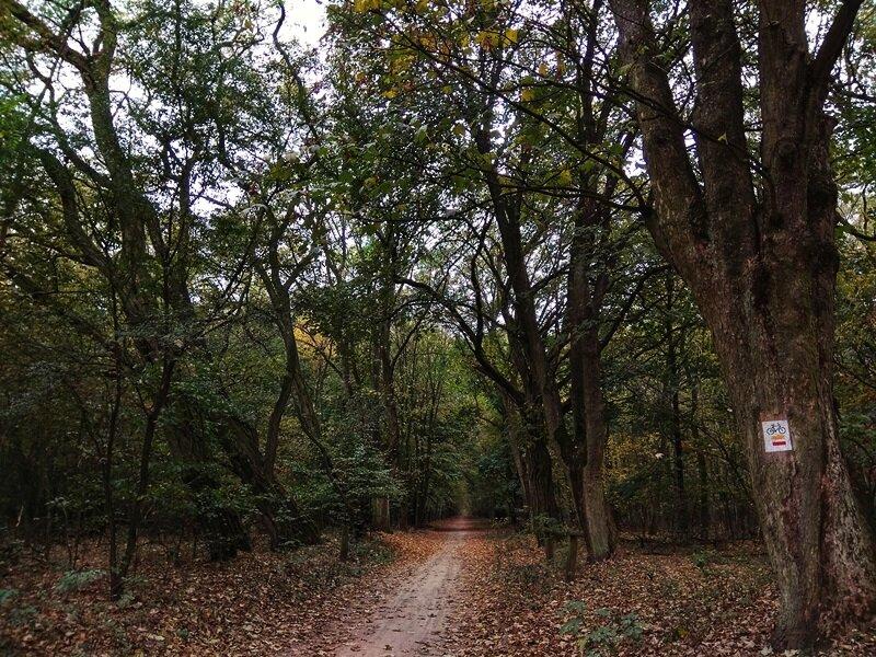 wielkopolski park narodowy szlaki