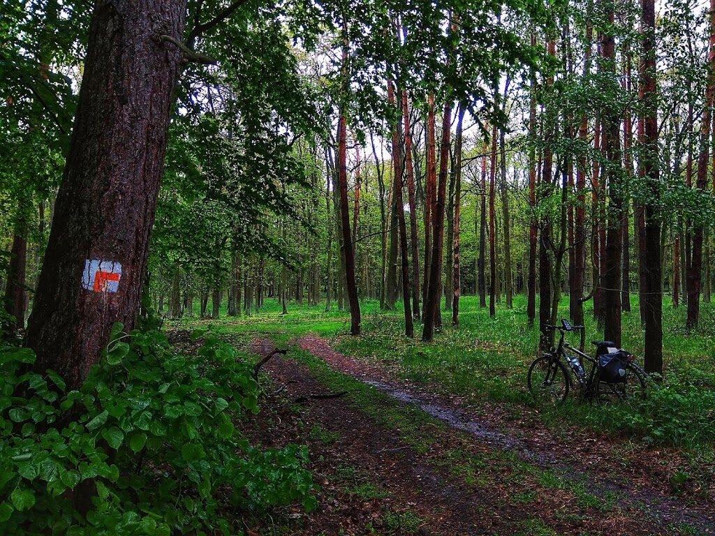 szlaki jeździeckie wielkopolski park narodowy