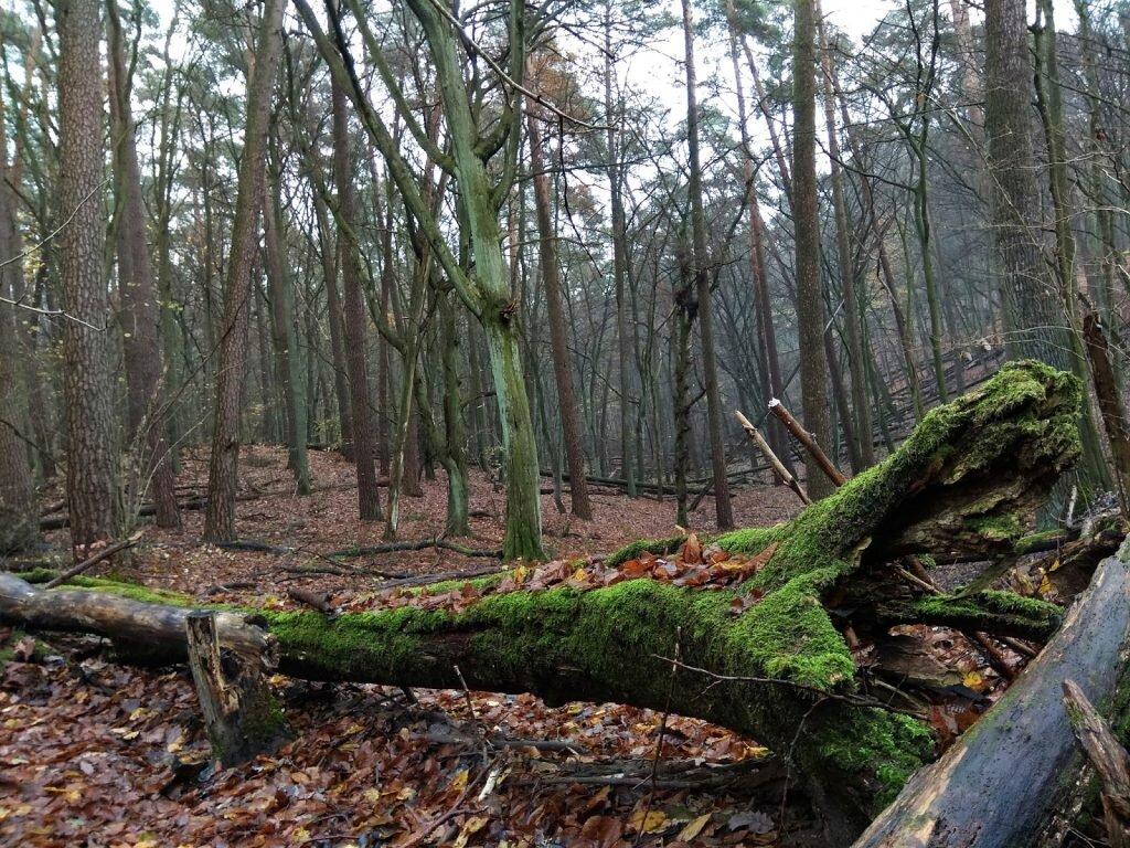 aktywna trójka, wielkopolski park narodowy