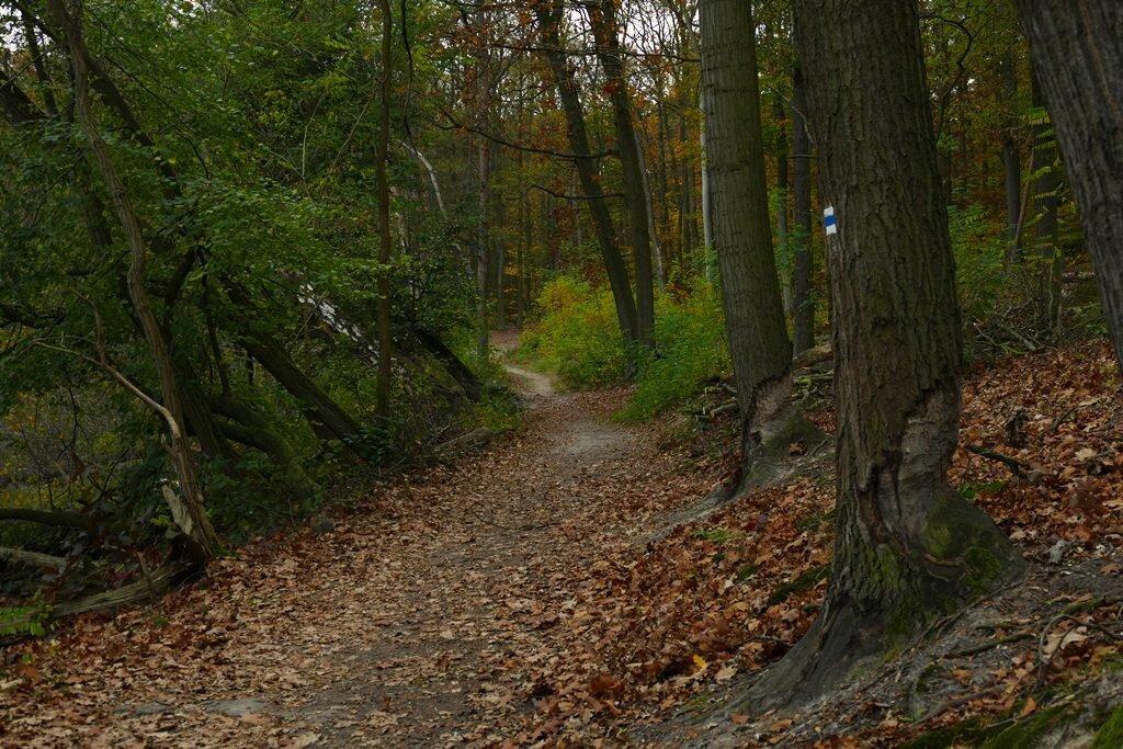 wielkopolski park narodowy szlaki, szlaki piesze