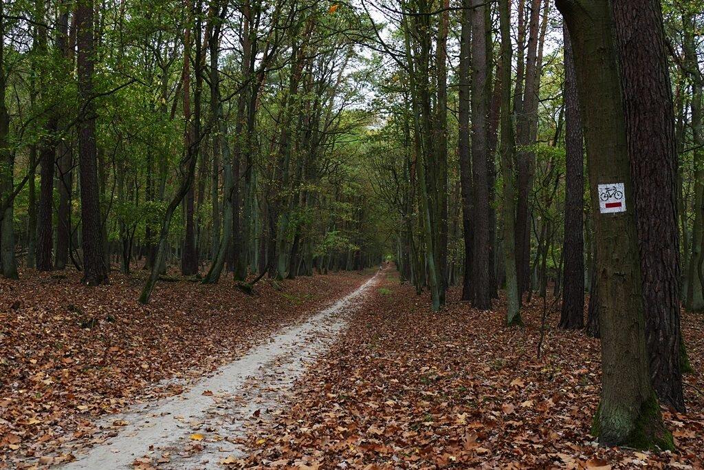 wielkopolski park narodowy szlaki rowerowe szlaki