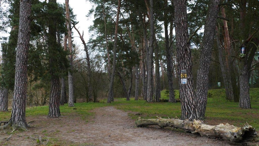 wielkopolski park narodowy szlaki rowerowe