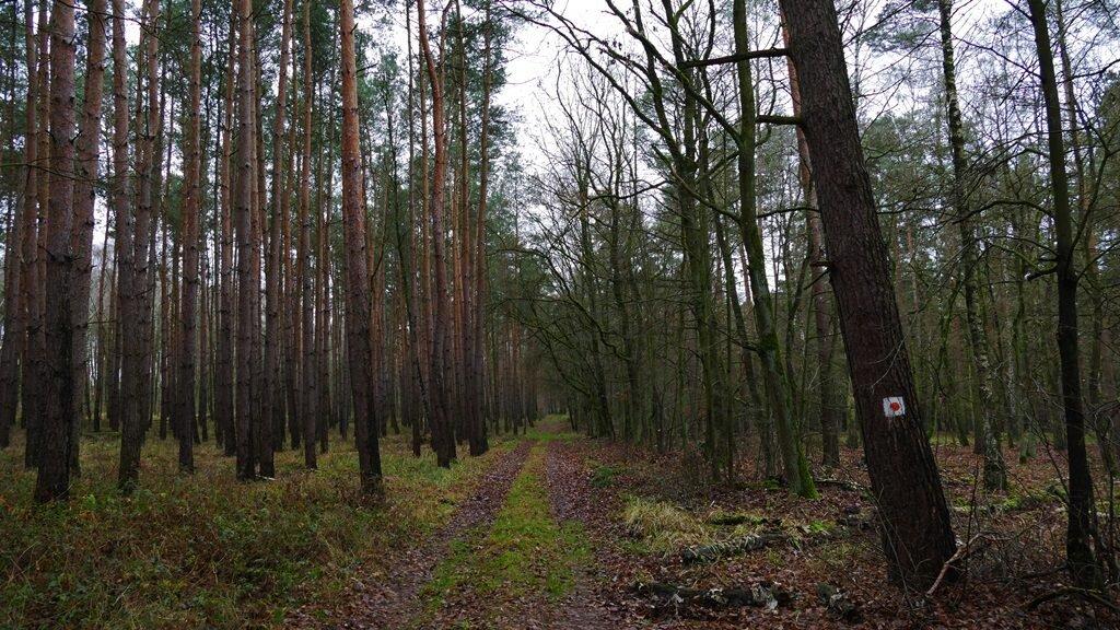 szlaki konne wielkopolskiego parku narodowego