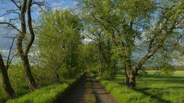 pętla komornicka w wielkopolskim parku narodowym
