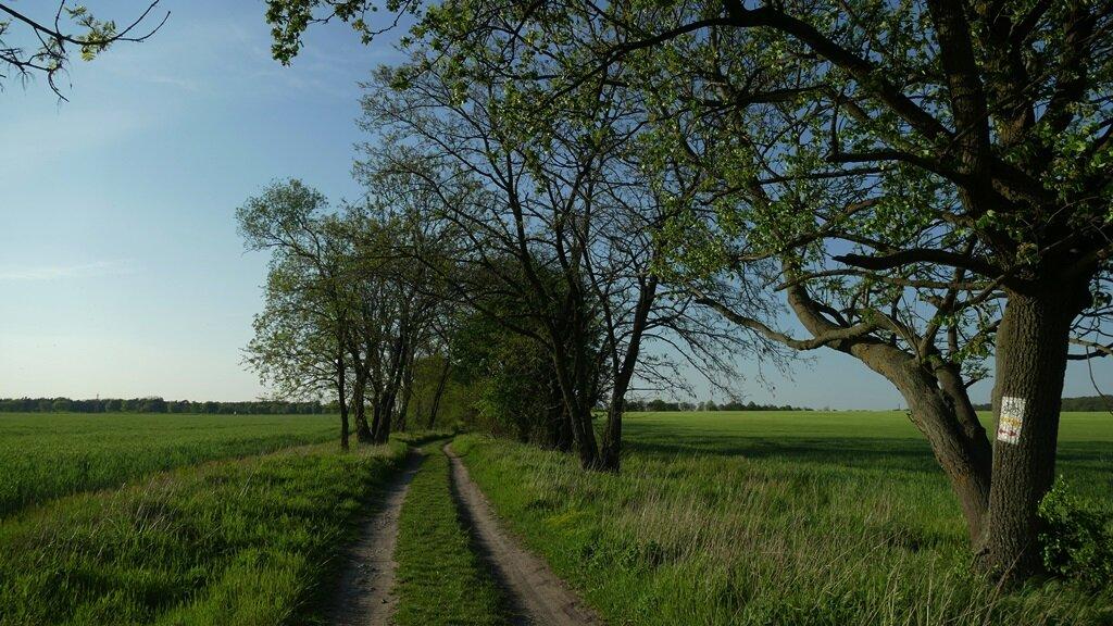Szlak niepodległości w gminie Komorniki